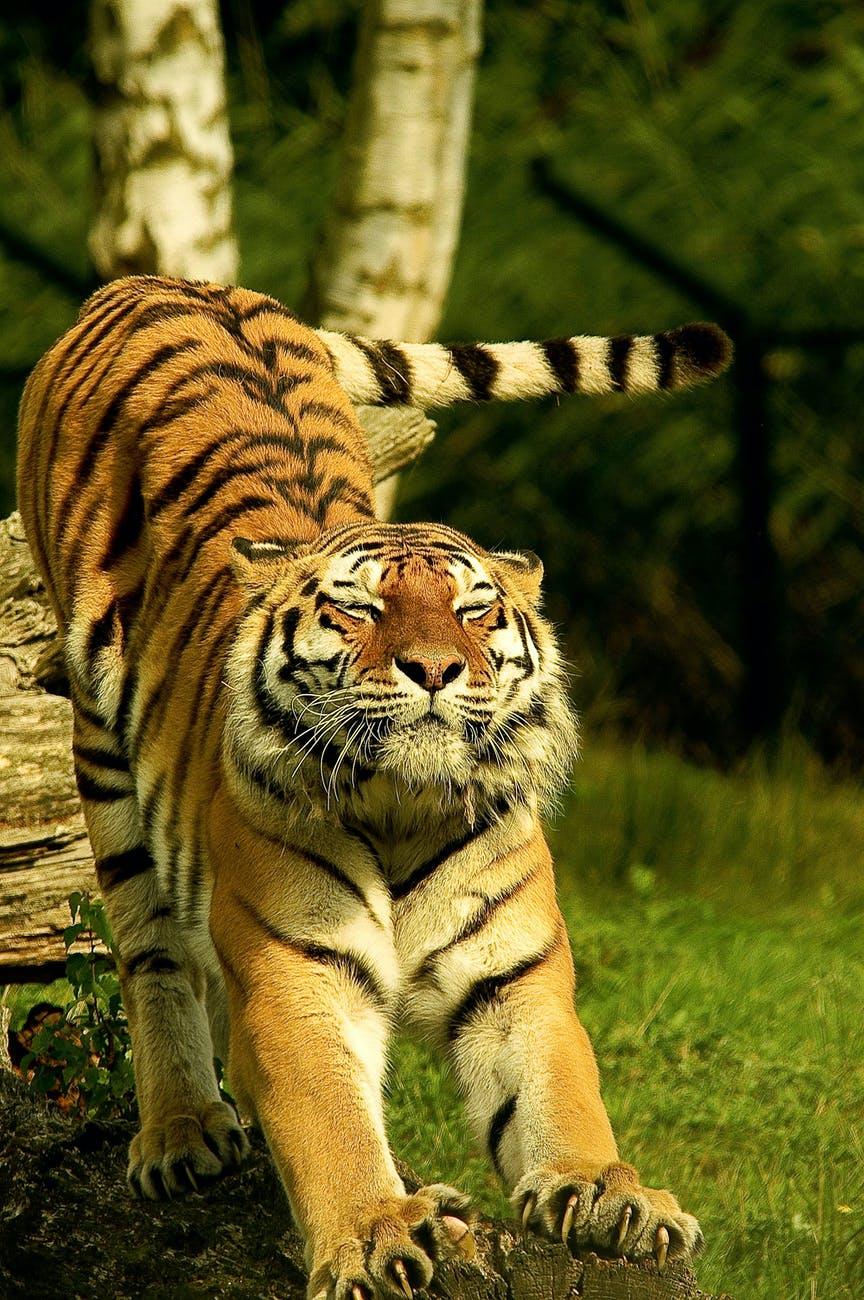 wildlife sancturies of Himachal Pradesh